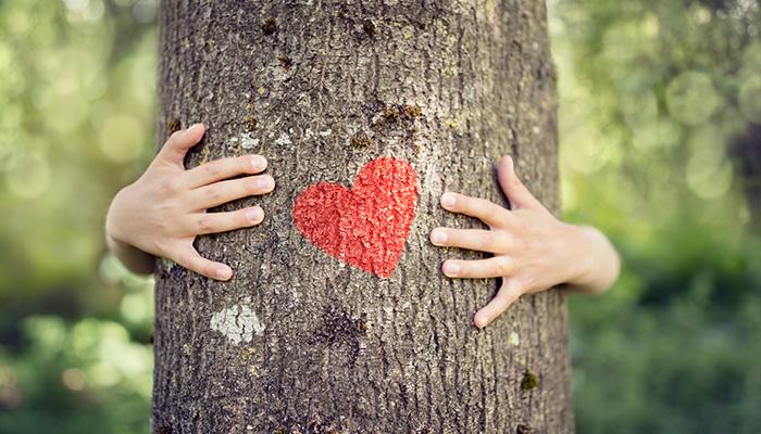 El Medio Ambiente y el desarrollo sustentable