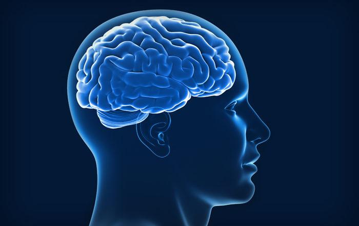 12 Curiosidades del cerebro